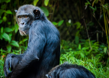Μαϊμού κριτικές με πολλά λεφτά